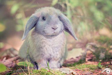 canada québec photographie photography trip travel voyage nikon d800 amérique america nature paysage landscape summer lapin rabbit animal forêt